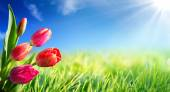 Spring and easter background with tulips in sunny meadow