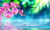 Fotografie Orchidej v zen zahrada s kapičky na rybníku