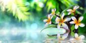 Zenová zahrada s keře a par na vodě