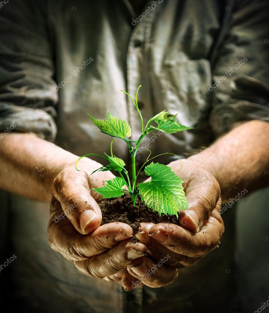 farmer hands holding a green young plant - new life concept