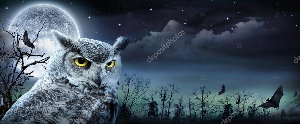Фотообои Halloween Scene With Owl And Full Moon