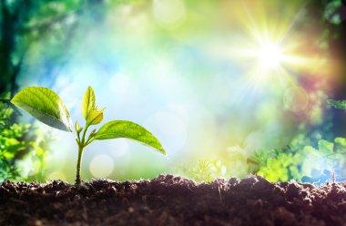 """Картина, постер, плакат, фотообои """"выращивание рассады - начало новой жизни"""", артикул 96385166"""