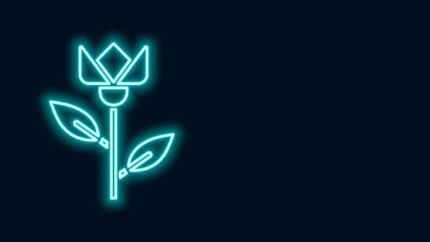 Ragyogó neon vonal Virág tulipán ikon elszigetelt fekete alapon. 4K Videó mozgás grafikus animáció