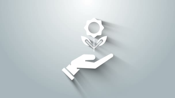 Fehér kéz gazdaság virág ikon elszigetelt szürke háttér. Vetés és palánta. Sűrűt ültetek. Ökológia. 4K Videó mozgás grafikus animáció