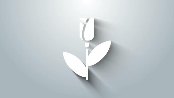 Fehér Virág ikon elszigetelt szürke háttér. 4K Videó mozgás grafikus animáció