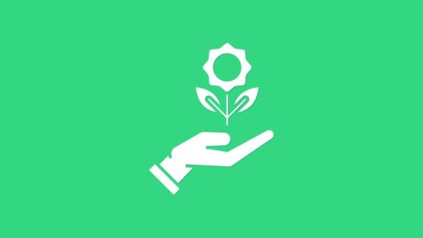 Fehér kéz gazdaság virág ikon elszigetelt zöld háttérrel. Vetés és palánta. Sűrűt ültetek. Ökológia. 4K Videó mozgás grafikus animáció