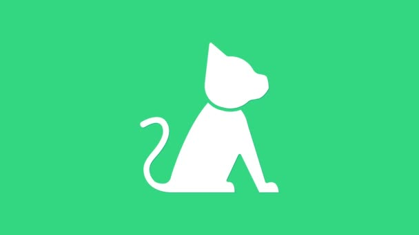 Fehér Macska ikon elszigetelt zöld alapon. 4K Videó mozgás grafikus animáció