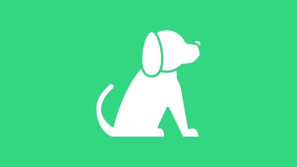 Fehér Kutya ikon elszigetelt zöld alapon. 4K Videó mozgás grafikus animáció