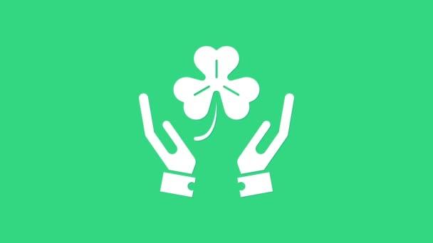 Fehér emberi kéz, négy levél lóhere ikonnal, zöld alapon elszigetelve. Boldog Szent Patrik napot. 4K Videó mozgás grafikus animáció