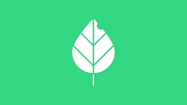 Fehér levél ikon elszigetelt zöld alapon. Friss természetes termék szimbólum. 4K Videó mozgás grafikus animáció