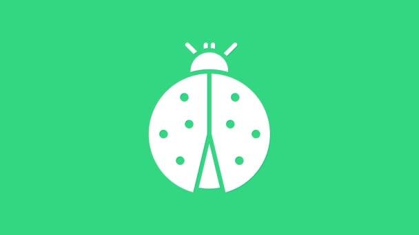 White Ladybug icon isolated on green background. 4K Video motion graphic animation