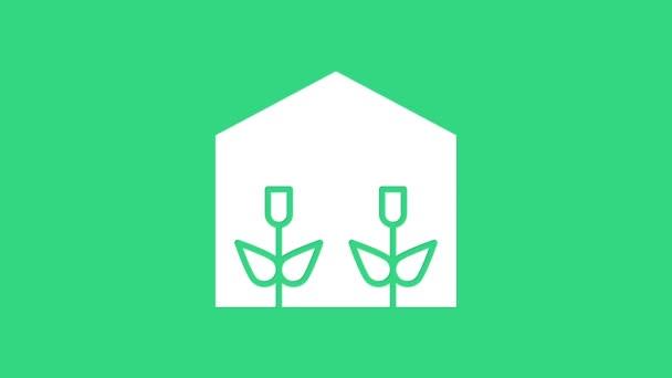 White Home üvegház és növények ikon elszigetelt zöld alapon. 4K Videó mozgás grafikus animáció