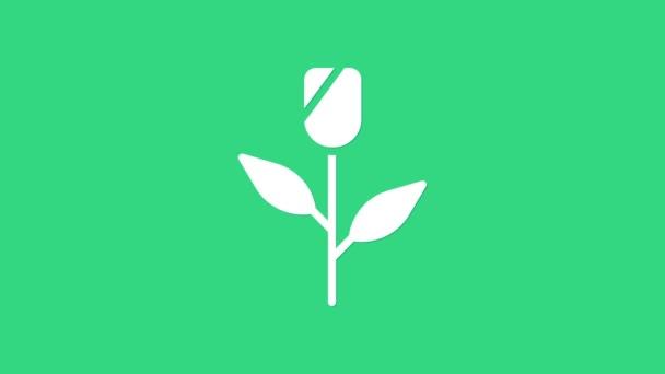 Fehér Virág ikon elszigetelt zöld alapon. 4K Videó mozgás grafikus animáció