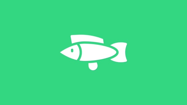 White Fish icon isolated on green background. 4K Video motion graphic animation