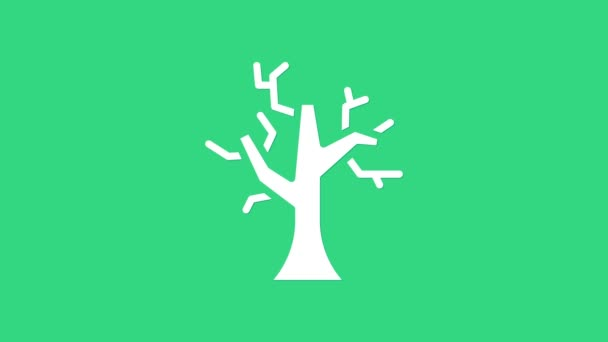 White Withered tree icon isolated on green background. Bare tree. Dead tree silhouette. 4K Video motion graphic animation