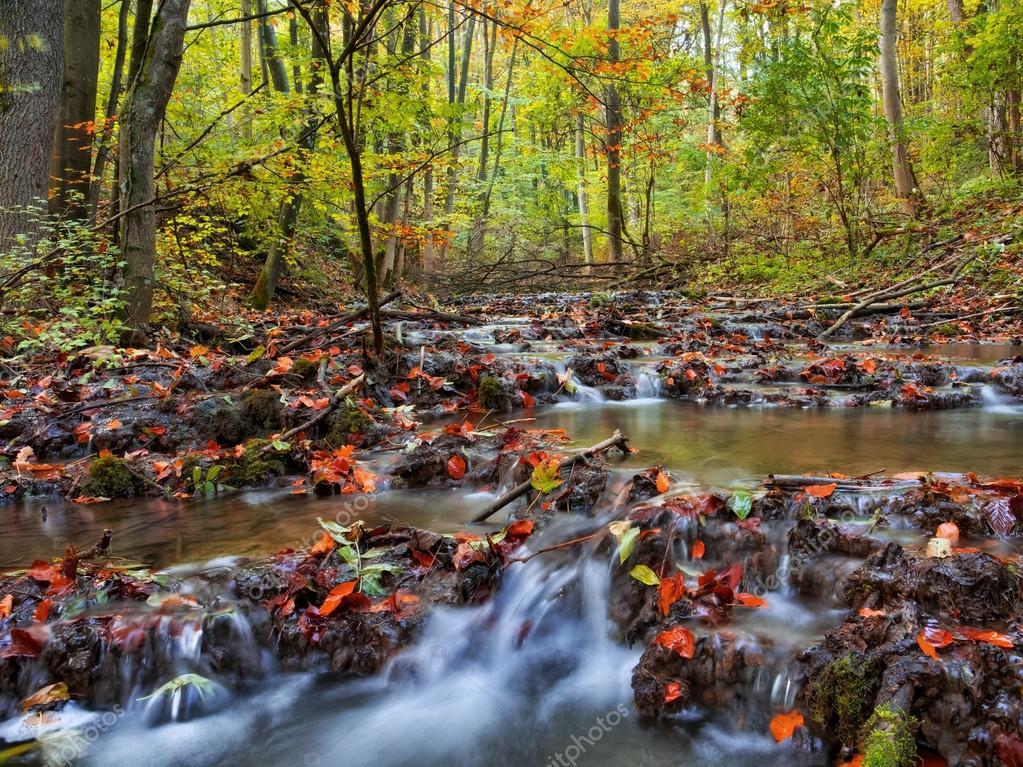 Idyllic Autumn Forrest