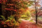 Krásný podzim v moři Kings