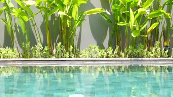 Schönes blaues Schwimmbad an einem heißen Sommertag mit tropischem Grün und Schatten