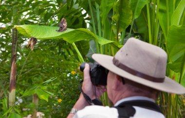 Photographing butterflies