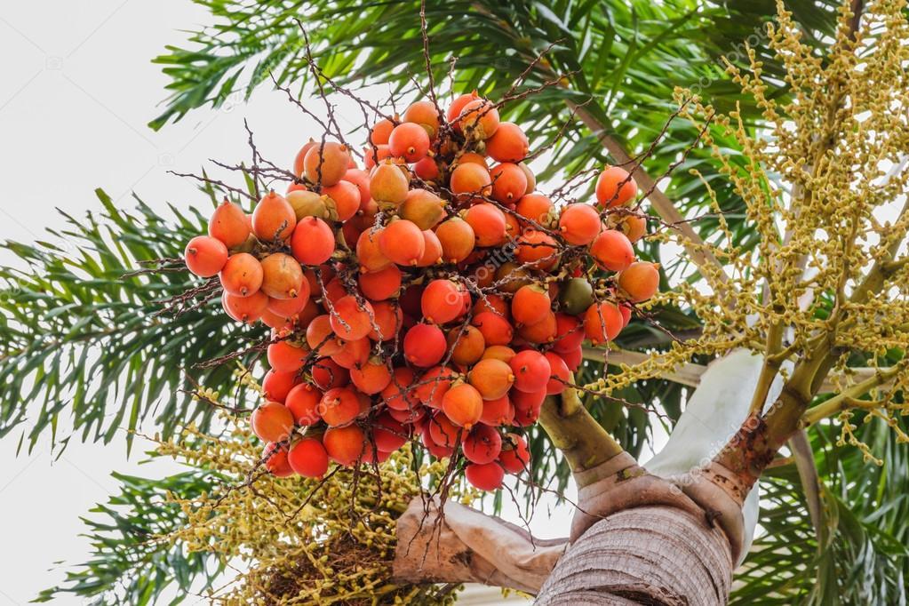 Frutos rojos del bosque traduccion ingles