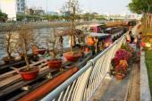 Boot, Frühlingsblume, Vietnam Tet