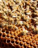 Beekeeping at Vietnam, beehive, bee honey