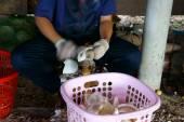 Asiatische Arbeiter, Kokos, Kopra, Material, Mekong-Delta