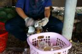 Asijské pracovníka, kokos, kopra, materiál, Mekong Delta