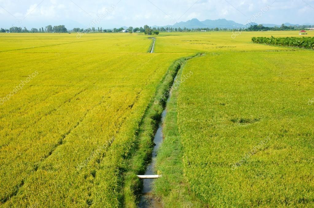 ベトナムの田舎風景、田んぼ — ストック写真