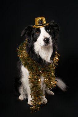 Dog in hat and tinsel