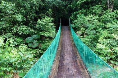Footbridge passing through dense forest