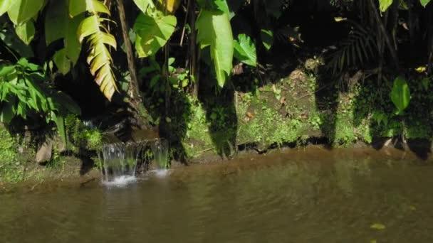 Proud tekoucí přes Les v rybníku