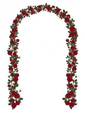 Arch of red climbing roses