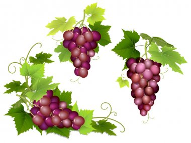 bunches of pink grapes