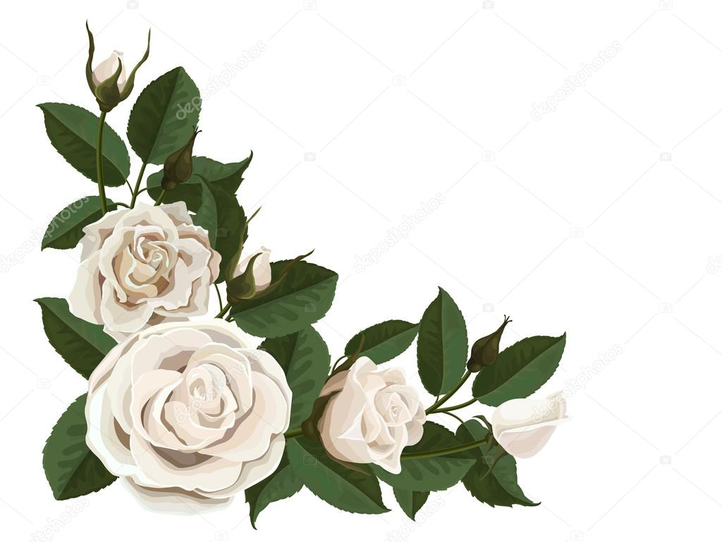 White rose buds and green leaves in the corner