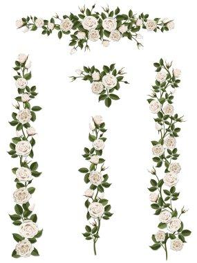 set brushes flowers climbing white roses