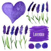 Vector watercolor elements set with lavender.