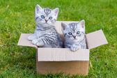 Karton doboz, a fű a fiatal macskák