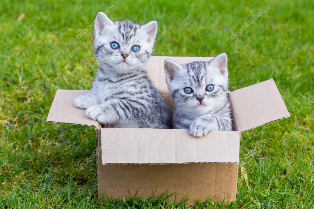 Young cats in cartboard box on grass