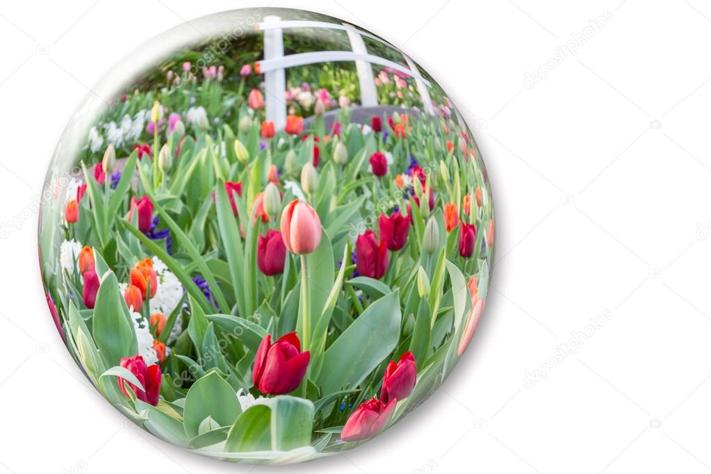Glass sphere reflecting red tulips flowers