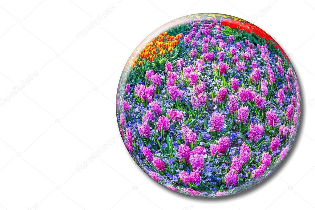 Crystal sphere with pink hyacinths on white background