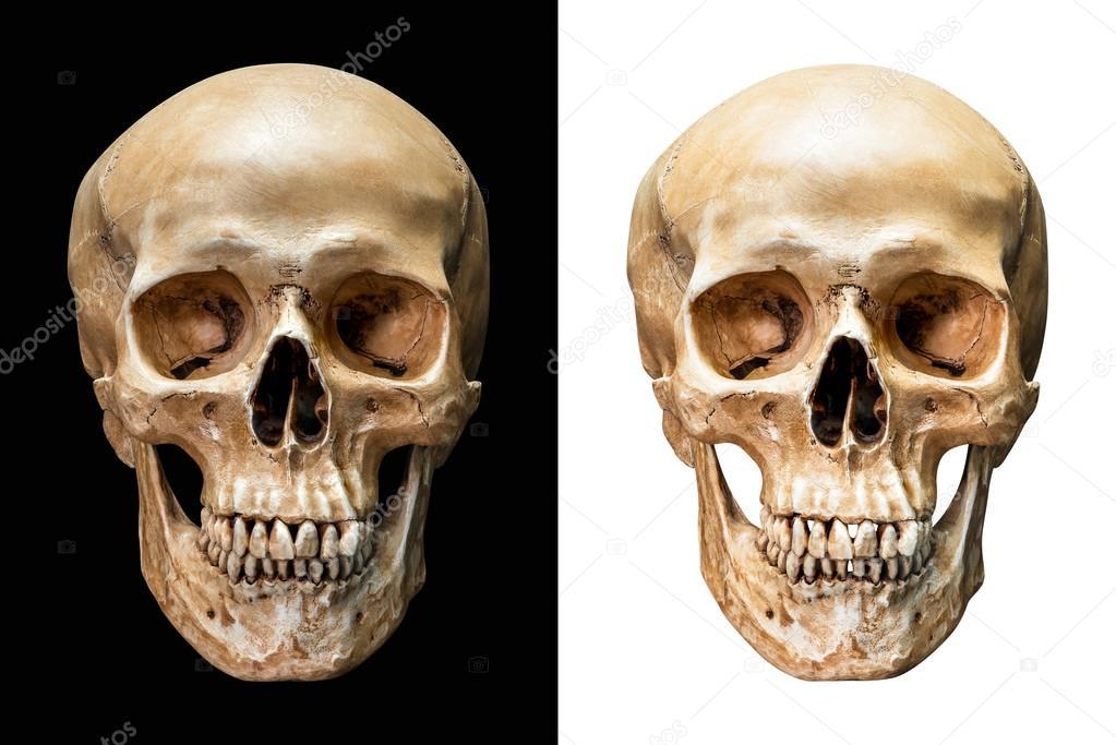 cráneo humano aislado — Fotos de Stock © fotoslaz #86431112