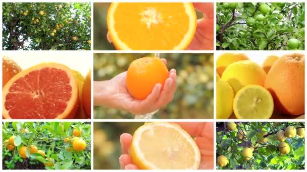 sestřih citrusových plodů