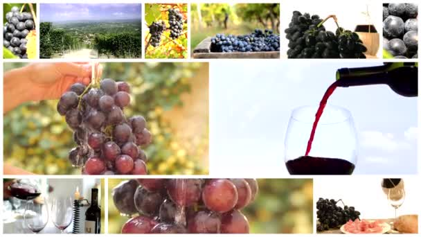 země vína koláž