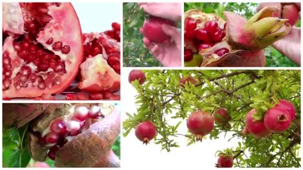 Sestřih z granátového jablka