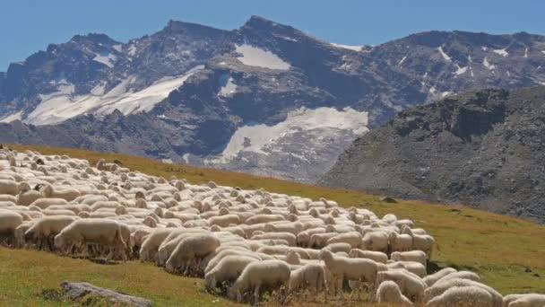 Alpine landscape with sheep flock