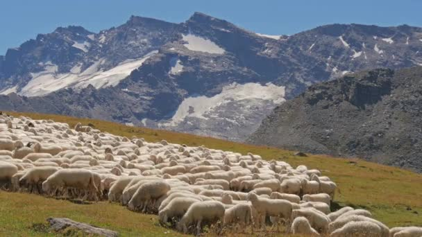 Alpine landscape with sheep flock
