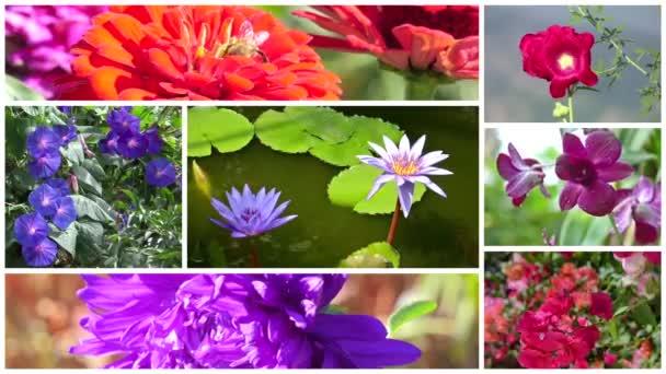nádherné květy koláž