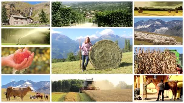 mezőgazdasági montázs, emberek és állatok, a termőföld