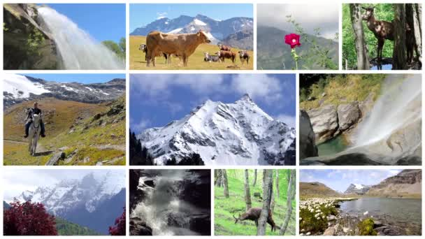 Alps montage. Landscapes, animals and people into the wild